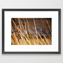 Into the dunes Framed Art Print
