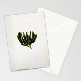 Botanical Moss Stationery Cards