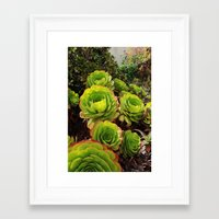 succulents Framed Art Prints featuring Succulents  by Liveart4evr