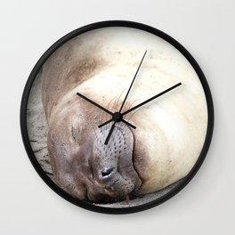 Portrait of a sleeping Elephant Seal Wall Clock