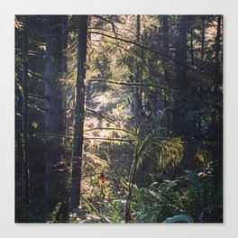 Forest Jewels Canvas Print