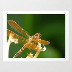 summer dragonfly III Art Print