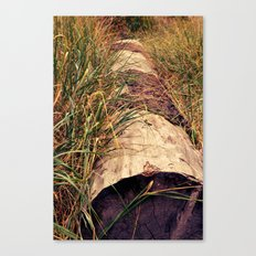 tucked away Canvas Print