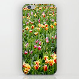 Long View of a Field of Multicolored Tulips in Amsterdam, Netherlands iPhone Skin