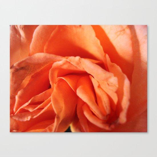 Rosa Vieja Canvas Print