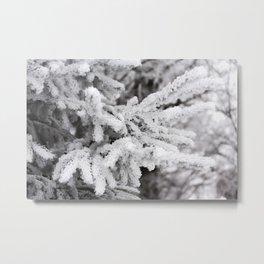 Snowy Spruce Needles 19 Metal Print