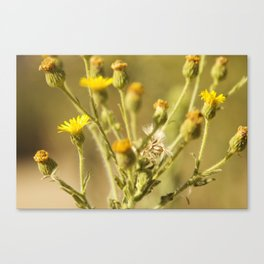 Yellows&Oranges Canvas Print