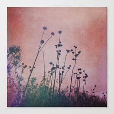 Through Rose Colored Glasses Canvas Print