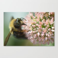 magical bee Canvas Print