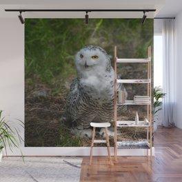 Alaskan Snowy Owl - Summer Wall Mural