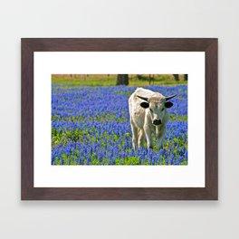 Indigo Calf Framed Art Print