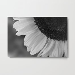 Black and White Sunflower Photography Print Metal Print