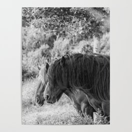 Pair of horses Poster
