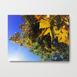 Being In Relationship With Our Living Universe Metal Print