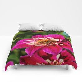 Desire Comforters