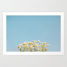 Daisies in the Sky Art Print