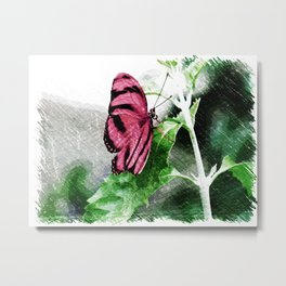 Pink Butterfly Metal Print