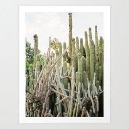 "Travel photography ""Ibiza Cactus Love"" | Modern wall art Ibiza Spain coast white tones sunset nature Art Print"