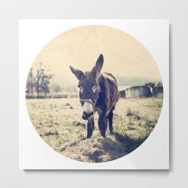 Vintage donkey Metal Print