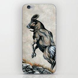 Fighting Bighorn Sheep Rams iPhone Skin