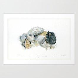 Seashell Composition 3 Art Print