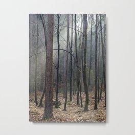 Magical winter light Metal Print