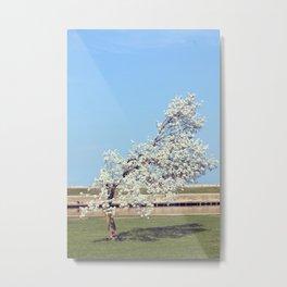 White Blossom Tree Metal Print