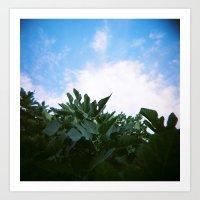 Green Leaves and Sky Art Print