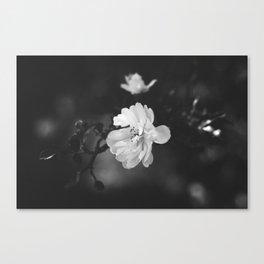 february flower Canvas Print