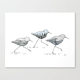 """ Shorebirds "" Canvas Print"