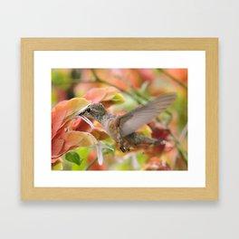 Little Ms. Hummingbird in for More Licks Framed Art Print