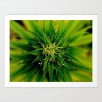 marijuana Art Prints featuring Marijuana by TilenHrovatic