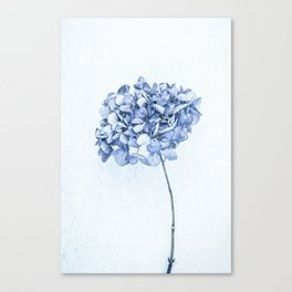 Hydrangea Blue 2 Canvas Print
