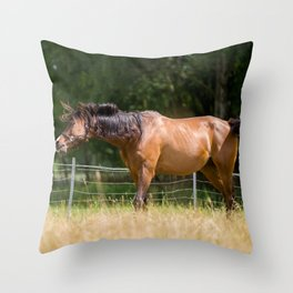 Royal class of horses, an Arabian thoroughbred Throw Pillow