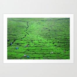 Tea plantations, Sri Lanka Art Print