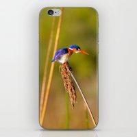 malachite iPhone & iPod Skins featuring Malachite Kingfisher by Emma.R