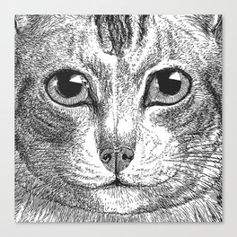 Black & White - Kitty Cat Close Up Canvas Print