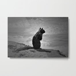Squirrel standing on a cliff overlooking the ocean Metal Print