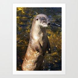 Sea Otter Canvas Print, Photographic Print, Art Print, Framed Print, Greeting Card, iPhone Case, Art Print