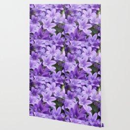 DREAMY - Purple flowers - Bellflower in the sun #1 Wallpaper
