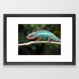 Turquoise Chameleon Framed Art Print