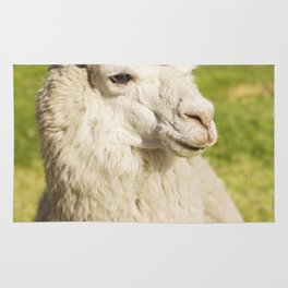 Close up of lama laying on the lawn Rug
