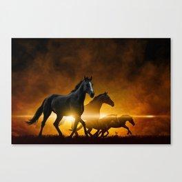 Wild Black Horses Canvas Print