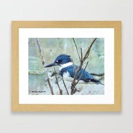 Young Belted Kingfisher (Repost) Framed Art Print