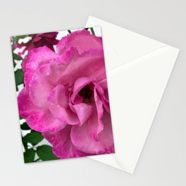 Bodacious Pink Rose | Large Pink Flower | Nature Photography Stationery Cards