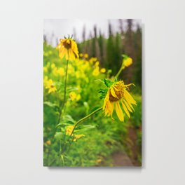 Yellow Wildflowers Utah Print Metal Print