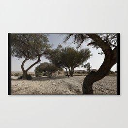 Acacia Wadi Canvas Print