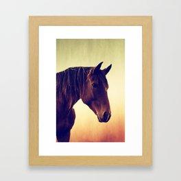 Western horse in porträit Framed Art Print