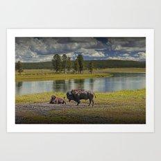 Buffalo by Yellowstone River Art Print