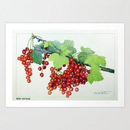 Red Dutch Botanical Painting  - Peinture botanique d'une viorne rouge  Art Print